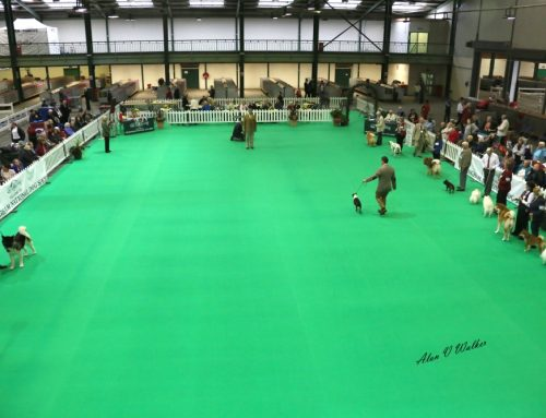 Birmingham National Dog Show